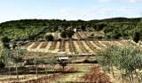 Terreno agricolo Rovinj, 65.998m2