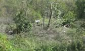 Kastav,Klanci,poljopr.zemljište 2300m2 pored ceste za 17000,00€