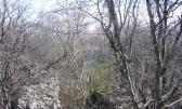 Kostrena (Stipići) - šuma - 4130m2