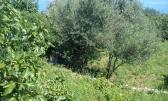 Mošćenička Draga - Negrađevinsko zemljite 4250 m2