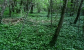 Krk,poljoprivredno zemljište(šuma) površine 4000m2, 2,5km od mora