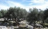 Otok Krk,poljoprivredno zemljište površine 381m2