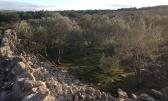 Krk,šuma površine 13 045m2