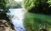 Šuma uz jezero-zamjena