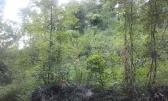 Rukavac - Teren od 1101m2 okružen zelenilom