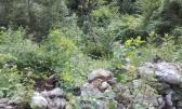 Veli Brgud - Negrađevinsko Zemljište u šumi