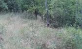 Dobreč - Šuma od 7.226m2 sa građevinskom česticom od 41m2