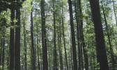 Brce - zemljište, šuma