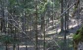 Šuma velika parcela