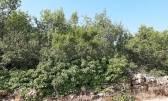 Istra Peroj, zemljište u sportsko rekreativnoj zoni u udjelima, 300m od plaže