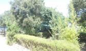 Istra, okolica Marčane, Kavran, vikend parcela-šuma, 300m od mora