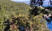 Terreno edificabile Medveja, Lovran, 10.500m2
