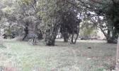 Terreno edificabile Banjole, Medulin, 0m2