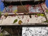 Kostrena-Urinj, kuća za adaptaciju