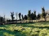 Šišan. 460m2, poljoprivredno - vikend zemljište