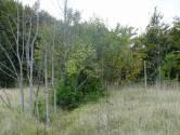 Šuma-Ravna gora