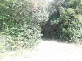 Istra, okolica Peruški, Duga uvala, šuma i pašnjak do T3 zone, 25 Eura/m2