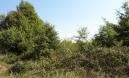 ISTRA, BALE, poljoprivredno zemljište 1500m od predivnih plaža