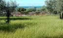 Rovinjsko Selo,velika građevinska parcela 1250m2 sa pogledom na more